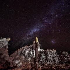 Кактусы пустыни Атакама.