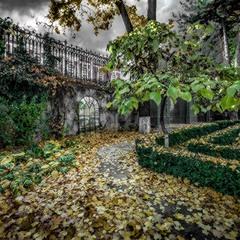 Сад заснул и листья сбросил...