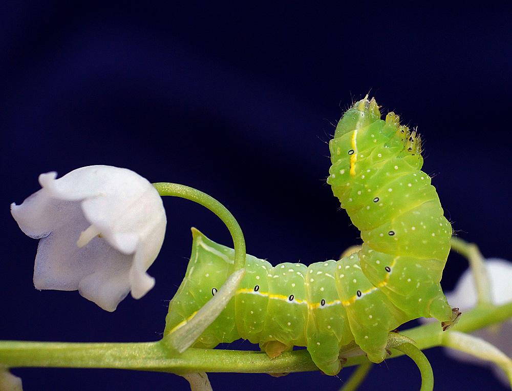 забора картинка двух гусеницах вот