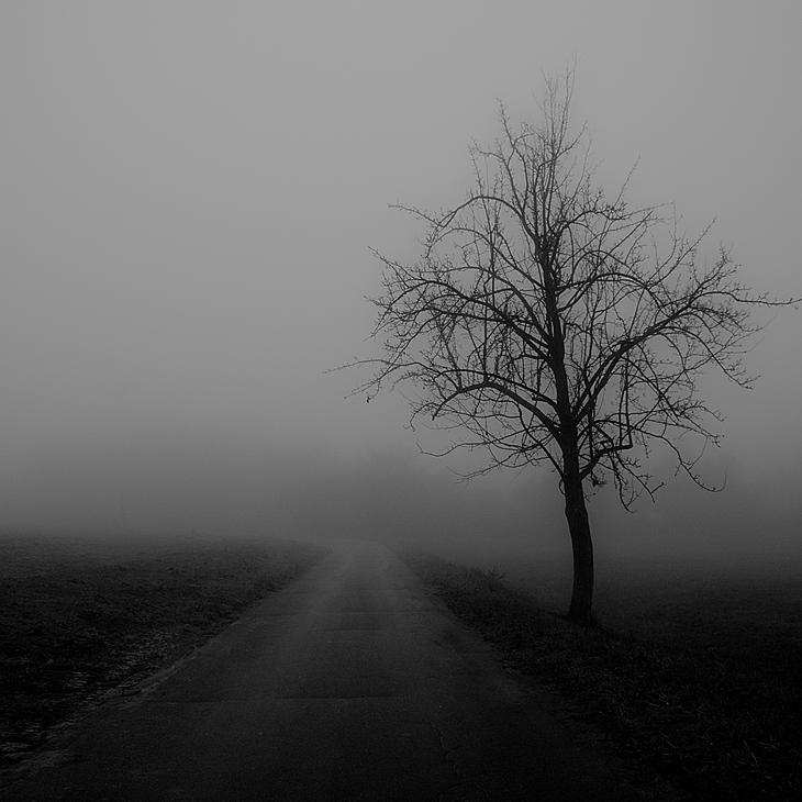 молодым шпинатом картинки пустота одиночество уютная