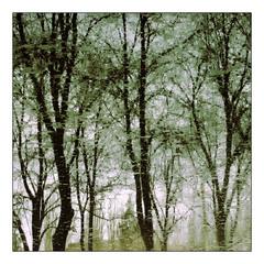 отражение деревьев в талой воде