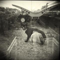 кот на вокзале