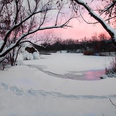 Рожеві відтінки позаминулої зими.
