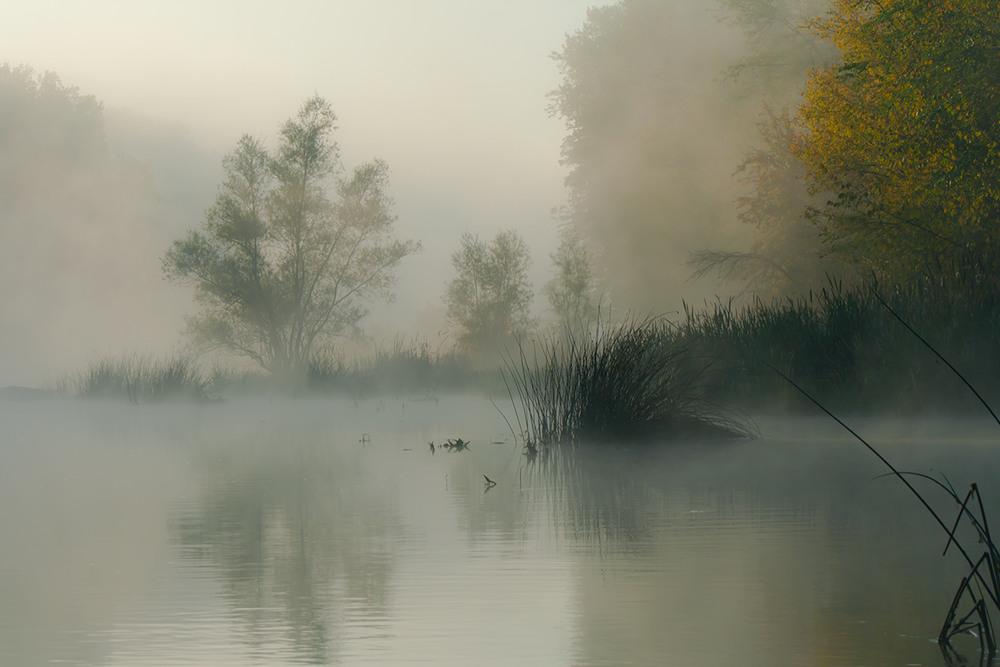 крапивника отличается фото картина туман отображены