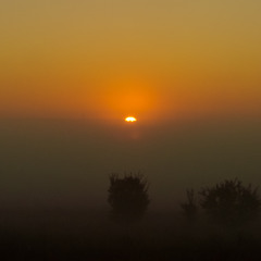 Ранок з туманом