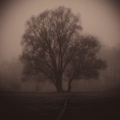 Ранок з туманом в листопаді