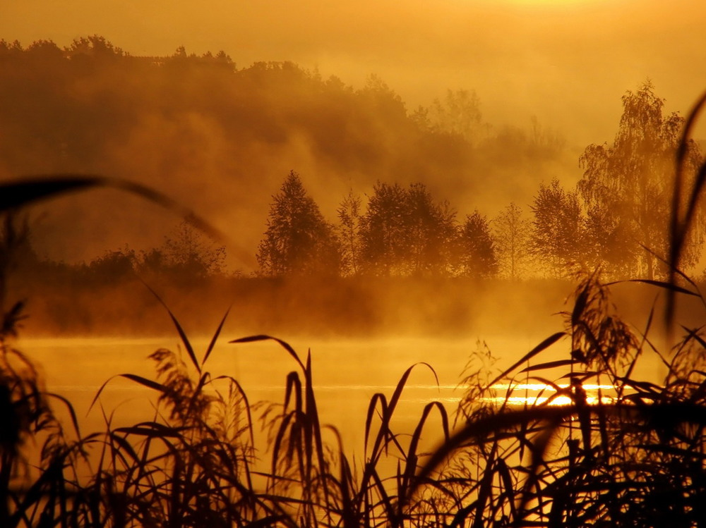 картинки дощовий ранок нас