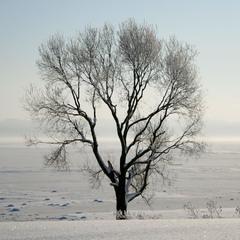 Один среди зимы