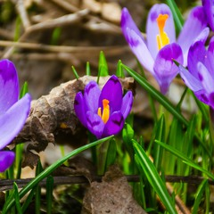Весняний настрій