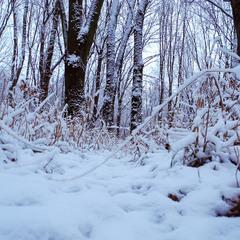Трішки снігу