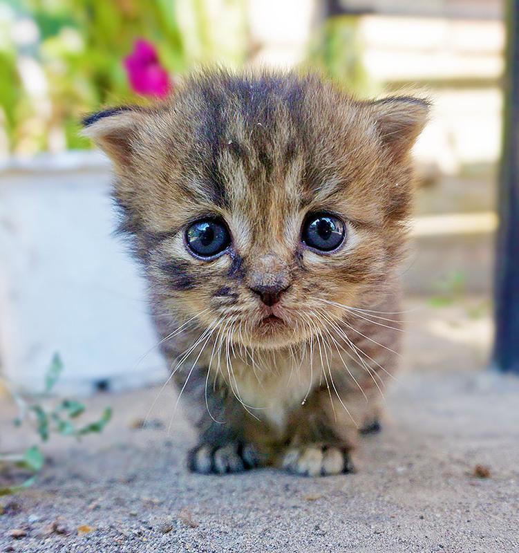 самые няшные картинки с котятами мужество героизм