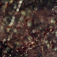 Багровая мозаика