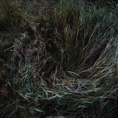 Ветрами покоренная трава