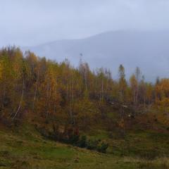 Закарпатская осенняя(панорамка)