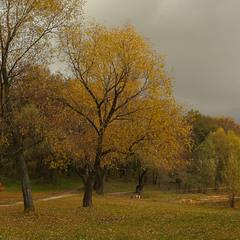 Куточок осені