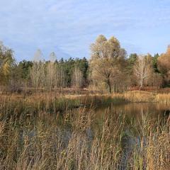 Рудо-блакитна осінь 2