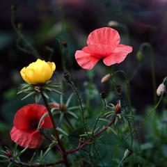 З життя квітів