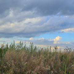Не кошена тринь-трава