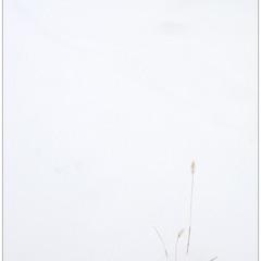 Автограф зимы.