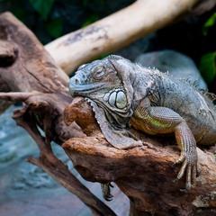 Уснувший дракон