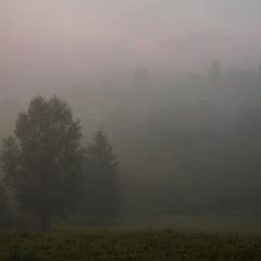 """""""Чарівний ранок в сивому тумані..."""" (с)"""