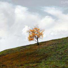 осень чувствует счастье