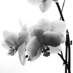 Focus on the life / BW