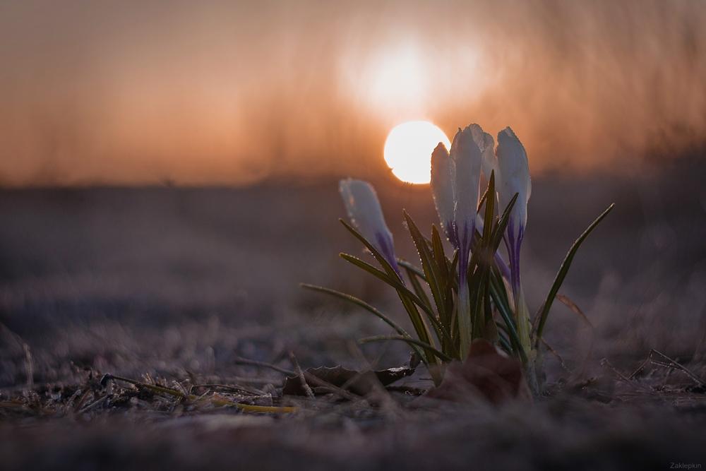 утро весна рассвет картинки можно использовать