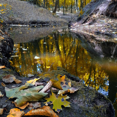 Запах голосіївської осені...