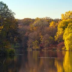 Голосіївська медова осінь