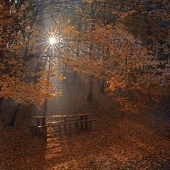 Зірчаста осінь