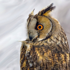 Мудре око