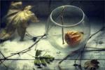 В стеклянном плену..