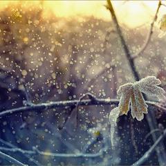 А с утра пошел снег..