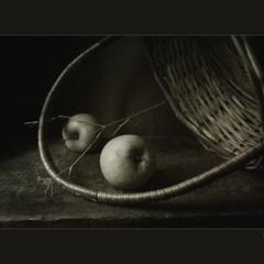 этюд с яблочками..