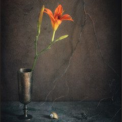 Аленький цветочек..