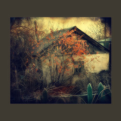 Осени забытый уголок..