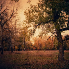Осень в Святогорье..