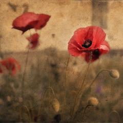 Время цветения..