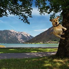 Hundeurlaub/Собачий отпуск