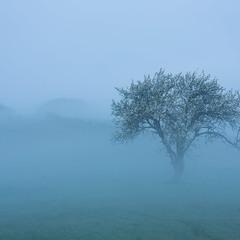 магія ранкового туману