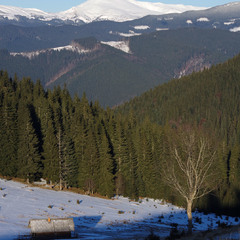 Ранкова полонина в Гринявських горах