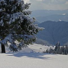 Десь в зимових Карпатах