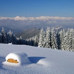 Під сніжним покривалом
