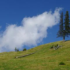 Смерекова хмарка на крутій горі...