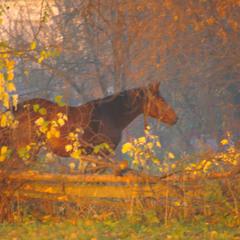 Кінь Пазл