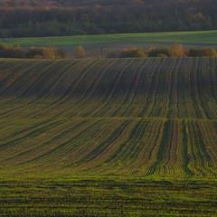 Осінні поля