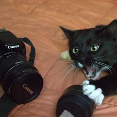 коли хотів стати фотографом, але в тебе лапки