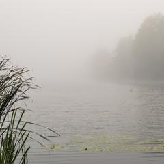 В туманном рассвете