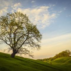 Одинокое дерево на склоне